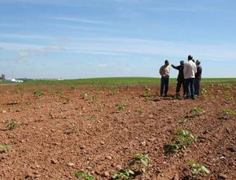 La sequía causa daños por 320 M€ en el campo valenciano