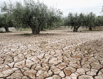 La Comunidad Valenciana pide medidas para resarcir a los agricultores por la sequía