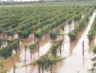 Fecoreva reclama que las CCRR puedan cobrar ayudas por catástrofe