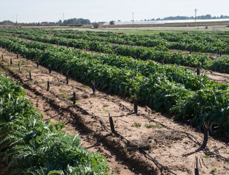 La agricultura y el regadío, servicios esenciales en la crisis del COVID-19